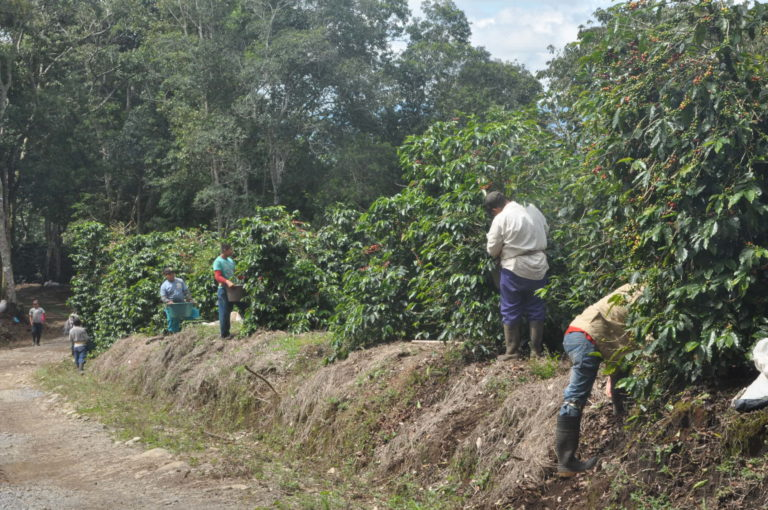 Photography of plantation workers in Panama